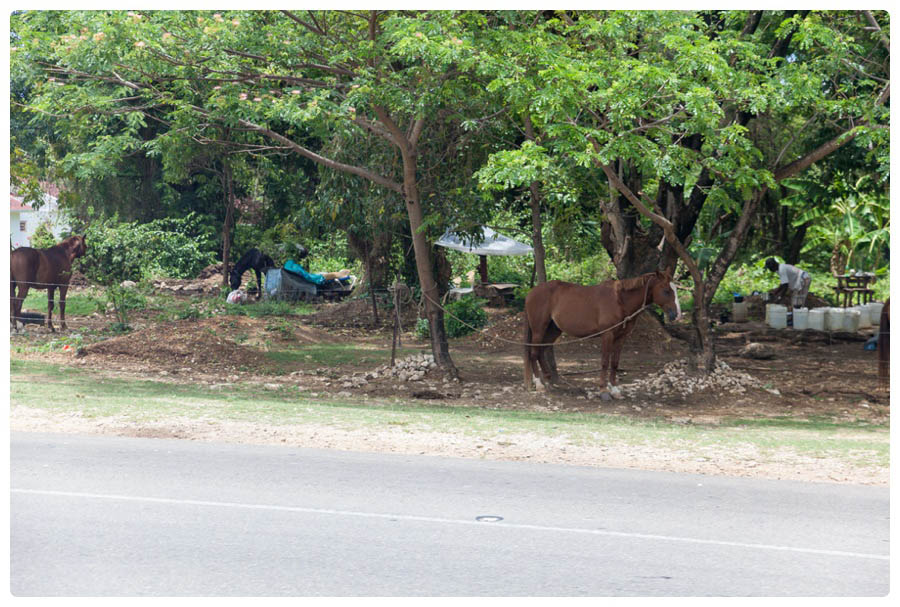 Sandals Ocho Rios, Jamaica- Honeymoon 89