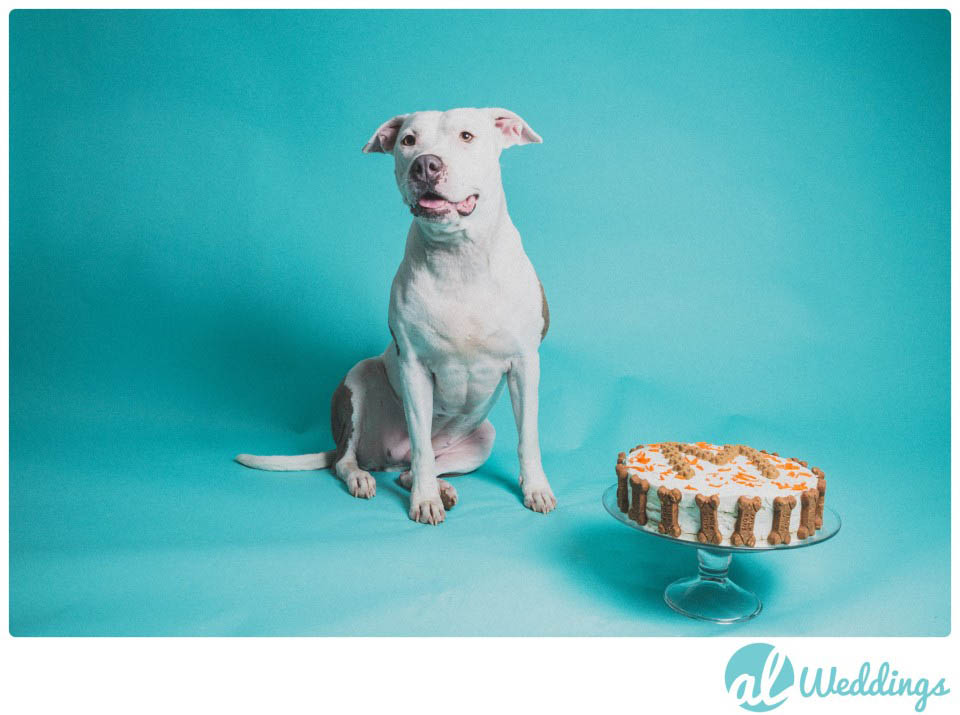 Mollys Birthday | American Pit Bull Terrier | Smash the Cake Session17